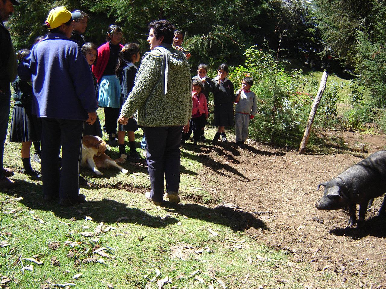 La escuela de Velázquez en los Andes ya tiene su primer cerdito gracias a Aulas Abiertas