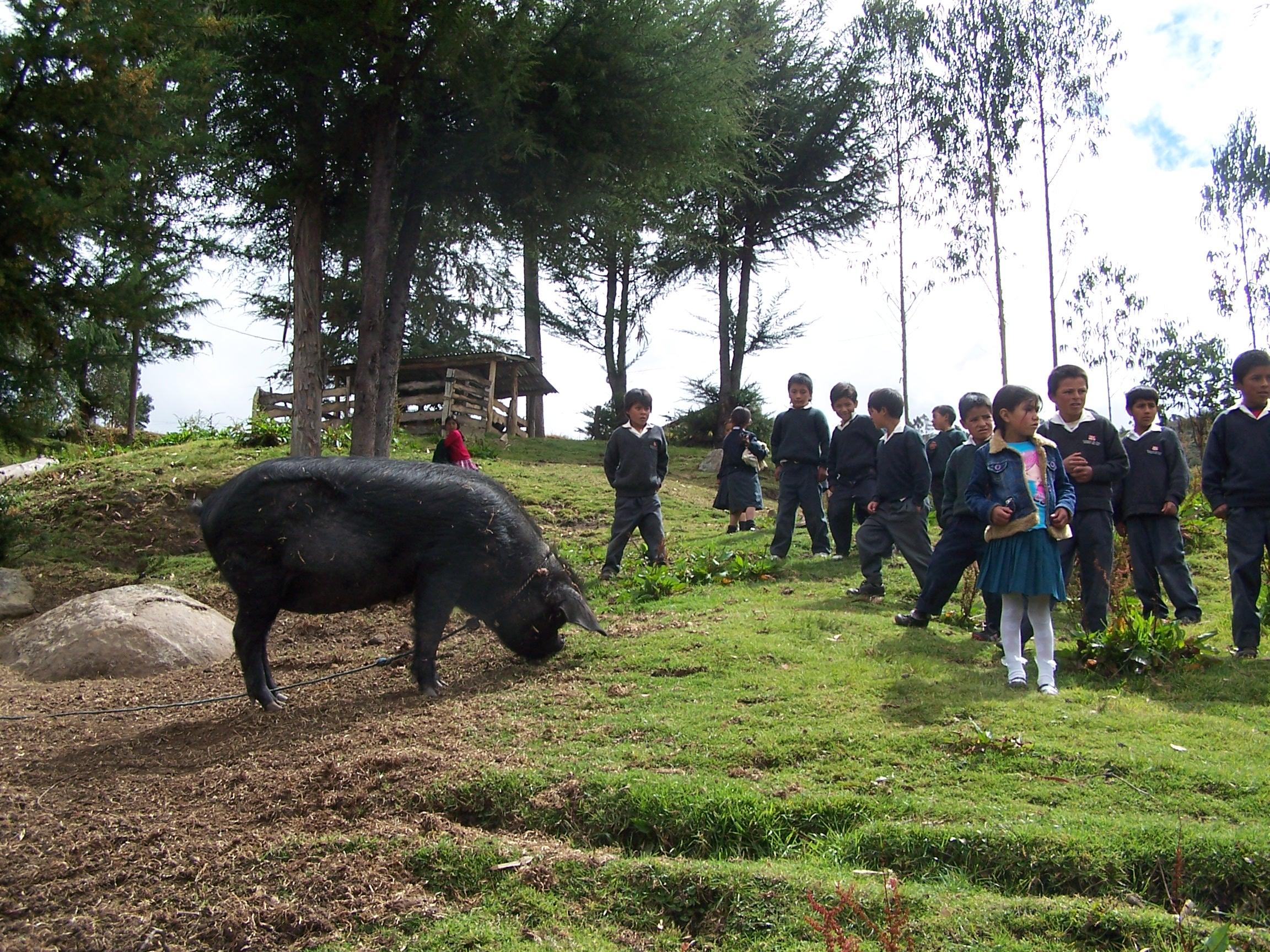 Alumnos de Ramoscucho con su cerdita