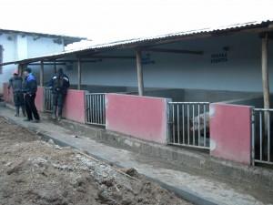 Porquerizas granja Aulas Abiertas Ramoscucho Perú